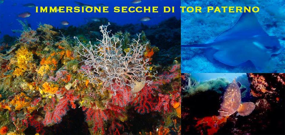 Immersione Secche di Tor Paterno – 8 Settembre 2018 6fe666e86095